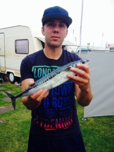 Makrele Raubfischer des Nordens